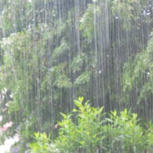 rain-rain